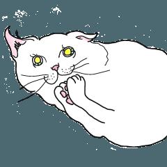 おねだり猫(希望編)
