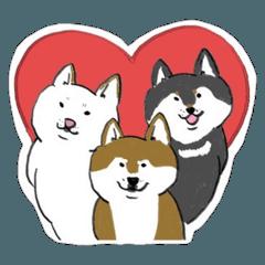 ❤️迷子犬の掲示板応援団5 柴犬 SHIBA