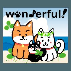 アイラブ柴犬家族2~wonderful life