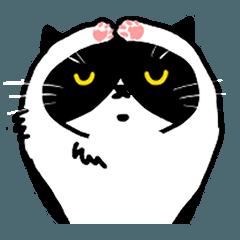 TABI the BIBIRI-CAT