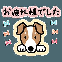 Every Day Dog ジャックラッセルテリア2