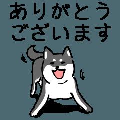[LINEスタンプ] 大人可愛い!柴犬のゆる敬語・丁寧語[黒柴]