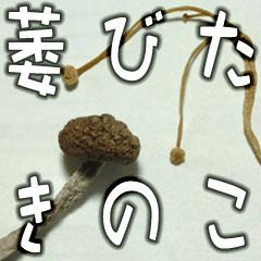 [LINEスタンプ] 萎びたきのこ(日常編)