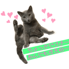 猫ちゃんno life