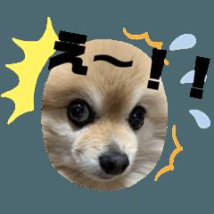 愛犬ラスちゃん2