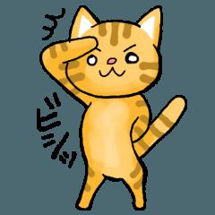 大阪在住オス猫8歳れおさん