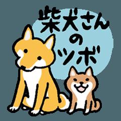 柴犬さんのツボ vol.5 オトナの気づかい編