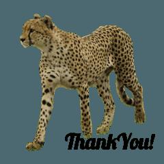 ケニアの野生動物inマサイマラ