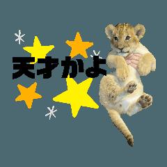 動物園マニアの動物図鑑