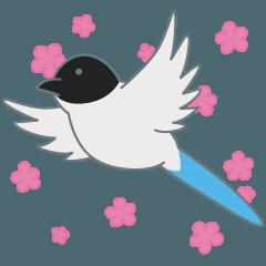 世田谷の青い鳥 オナガ