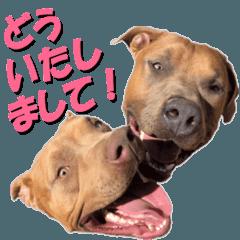 [LINEスタンプ] 一般社団法人Animal Rescue Nursing
